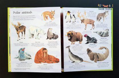 książka dla dzieci po angielsku o zwierzętach z rozkładanymi stronami