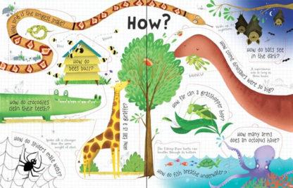 książka z otwieranymi okienkami o zwierzętach po angielsku