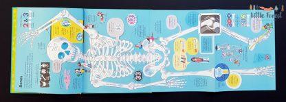 książka dla dzieci o ciele człowieka po angielsku z rozkładanymi stronami