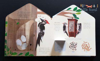 książka dla dzieci o ptakach z okienkami po angielsku