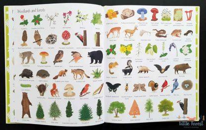 atlas przyrodniczy dla dzieci po angielsku