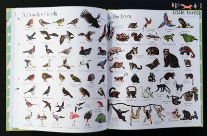 słownik obrazkowy o zwierzętach po angielsku