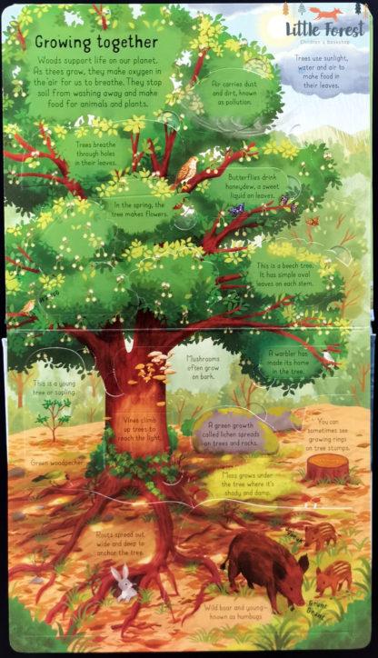 książki las przyroda dla dzieci